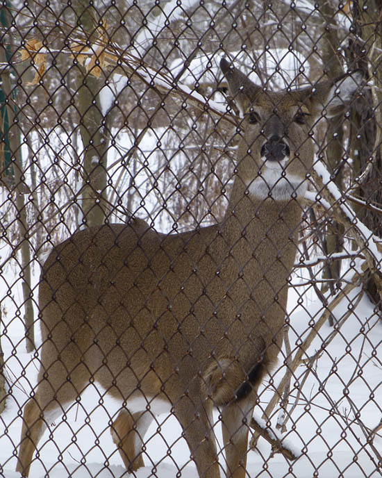 install a deer fence