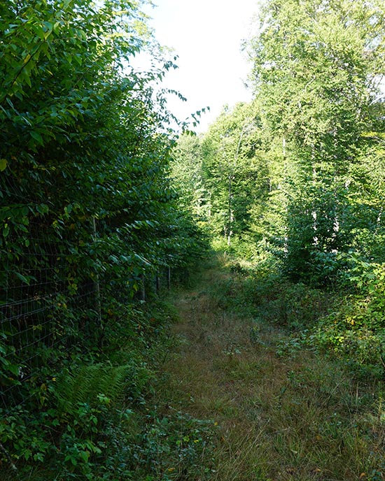 protect native plants with a deer fence