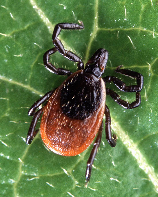 avoid ticks and tick bourne illnesses