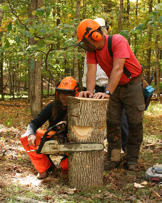 learn about chainsaw safety