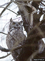 Nocturnal Animal Sounds of New York State